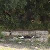 Cat lounging in the shade at the Ancient Agora in Athens.