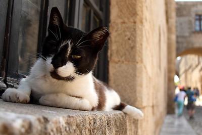Sleepy cat in Rhodes Old Town.