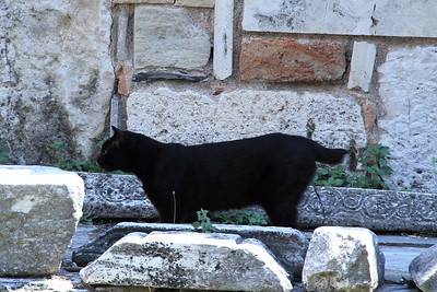 Black cat at the Ancient Agora.  Note that it is missing most of its tail.