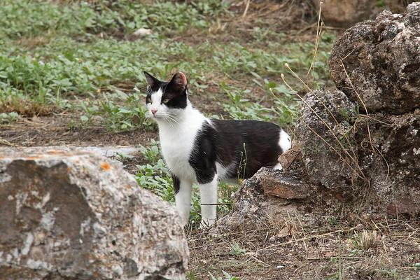 Cats of Greece (June 2017)