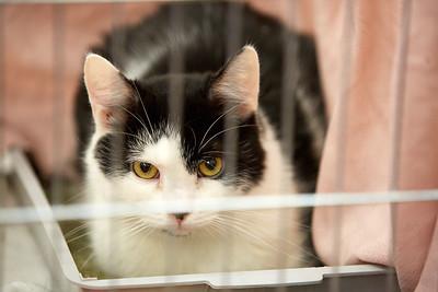 17.03.2018, 4. jarní umisťovací výstava koček