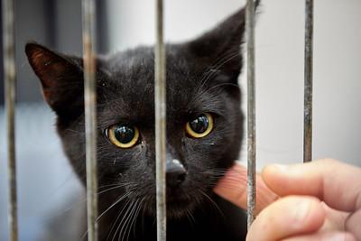 19. umísťovací výstava koček bez domova