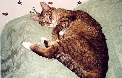 I adopted Willow in July 2001, hoping she'd have a calming, motherly influence on Ollie. I didn't realize she was as old as she was, and she turned out to be more like a cranky old grandma with him.  However, she was very sweet to me during the year we had together.