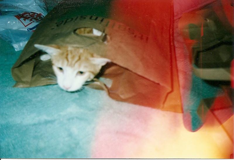 Ollie.  Date unkown.  Scanned snapshot taken by Mom.