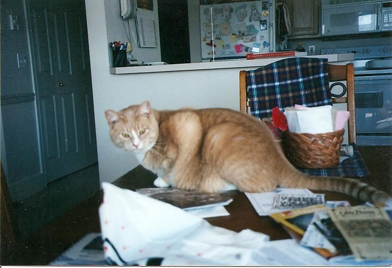 Stan.  Date unkown.  Scanned snapshot taken by Mom.
