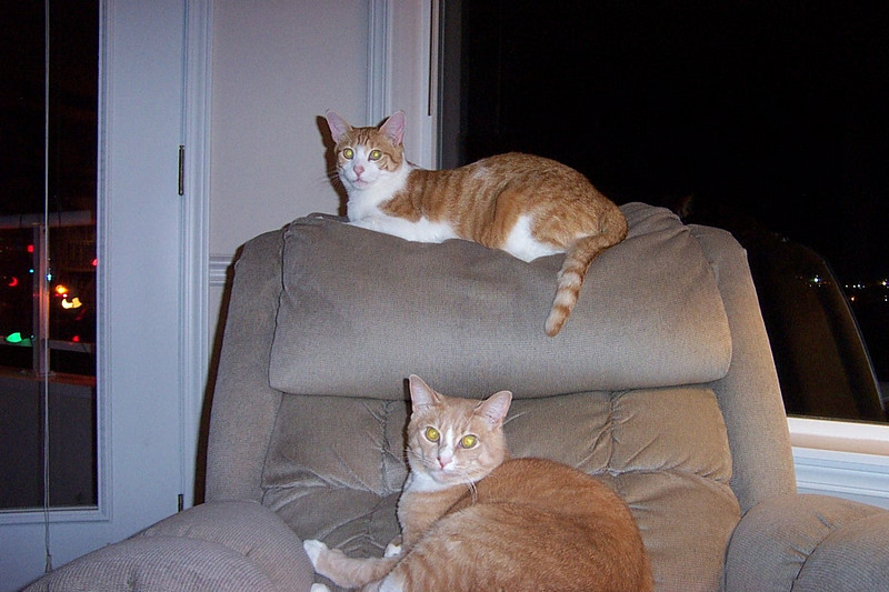 Ollie and Stan.  January 2003.