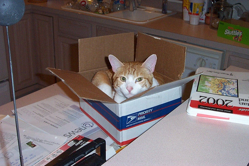 Ollie in a box.  January 2003.