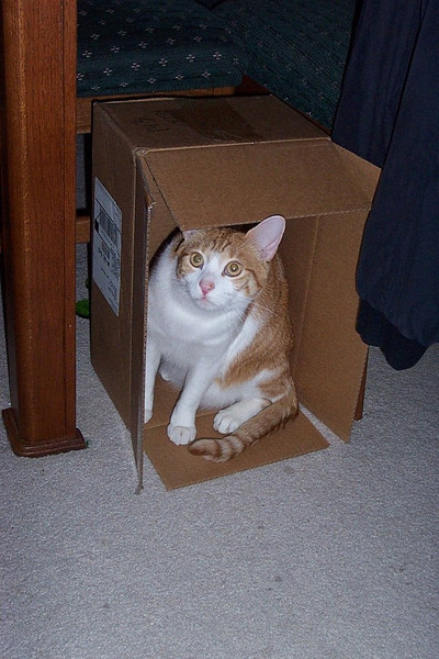 Ollie in a box.  May 2003.