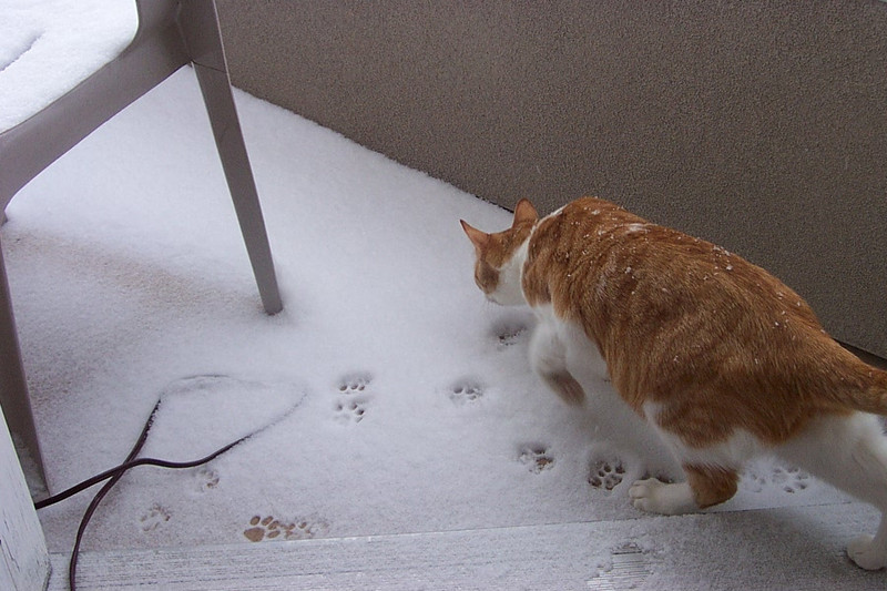 Ollie discovers snow on the balcony!  January 2004.
