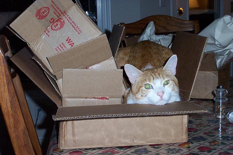 Ollie in a box.  November 2004.