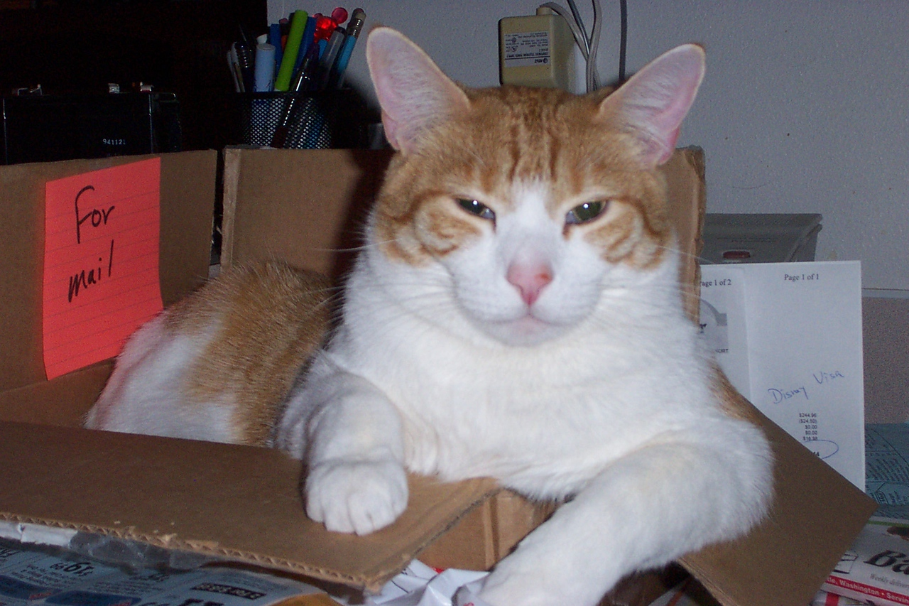Ollie in a box.  April 2005.