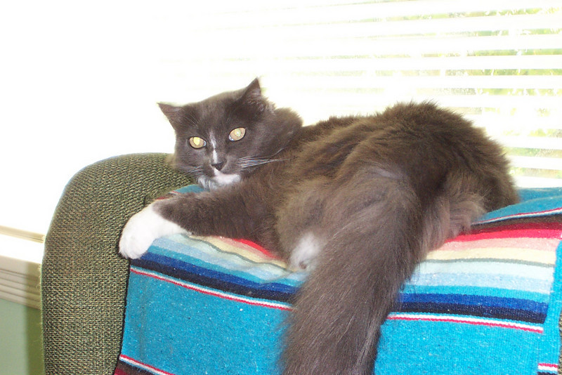 This is Dave's cat Minnie, photographed at his house in July 2007.