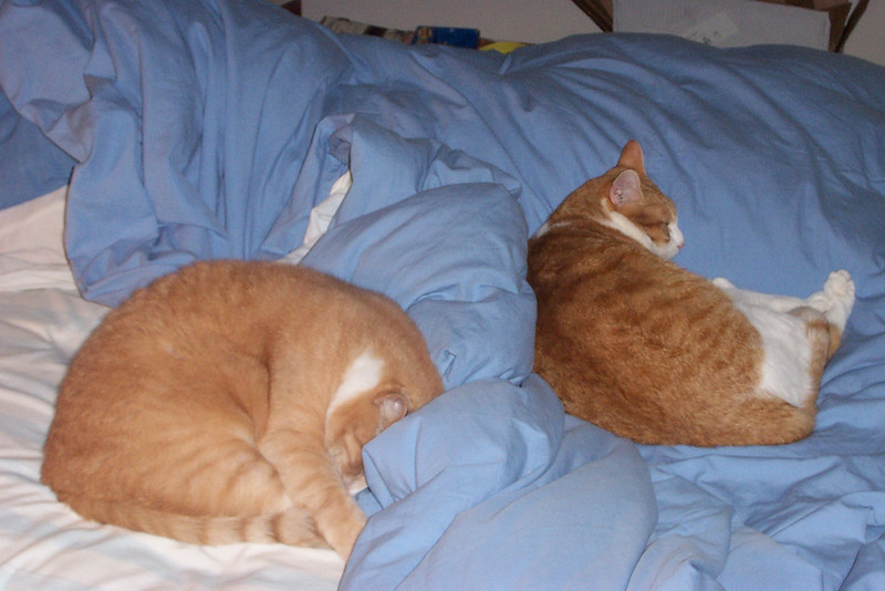 Stan and Ollie in a rare moment--they were sleeping on my bed at the same time!  January 2007.