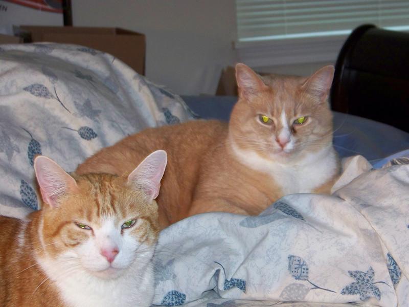 Ollie & Stan.  December 2007.