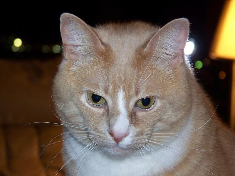 Stanley.  December 2007.  I love that face!!!