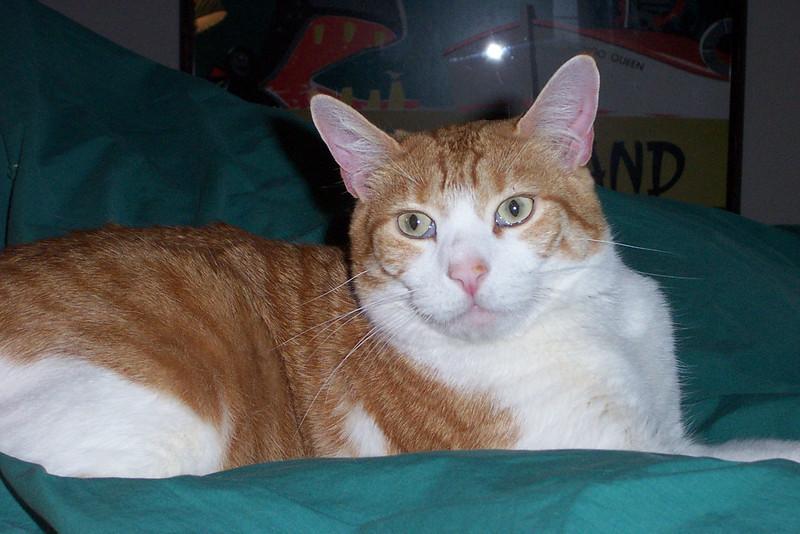 Ollie.  April 2007.