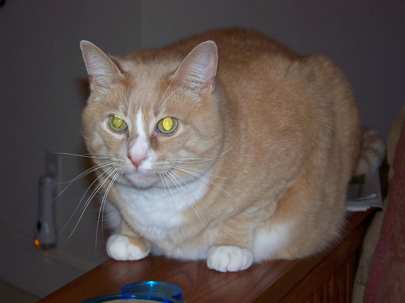 Stanley.  December 2007.
