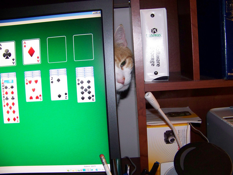 "Ollie says ""Forget solitaire--play with me!""  April 2008."