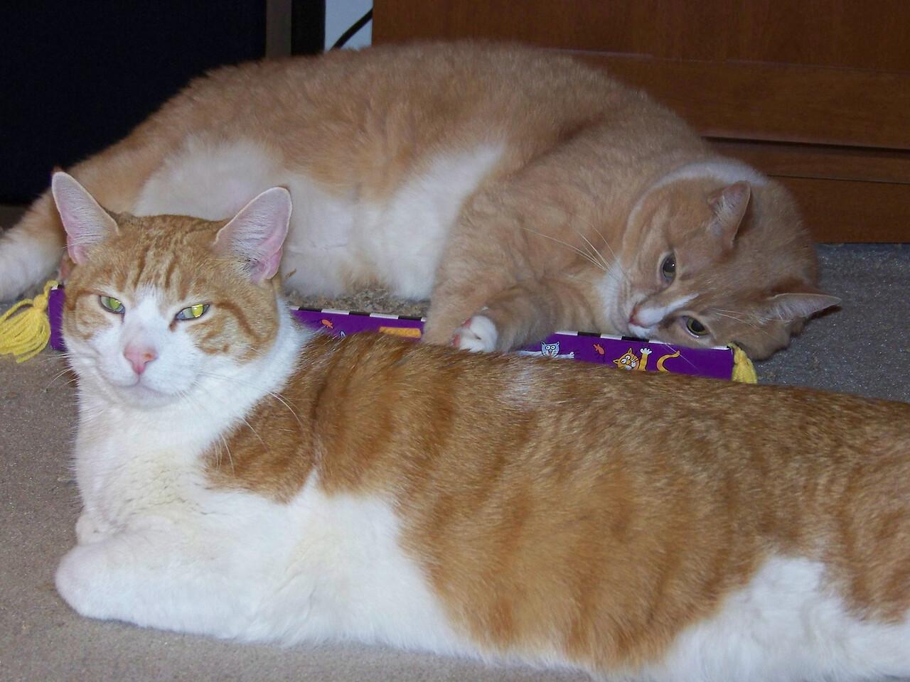 Stan & Ollie (taken with flash).  October 2009.