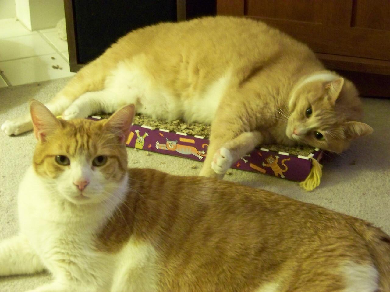 Stan & Ollie (no flash).  October 2009.