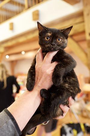 Umísťovací výstava koček v historickém špejcharu v Praze Dubeč