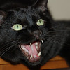 Batman 10/03/06<br /> 1996 - 09/22/2010<br /> RIP we will miss you Batman