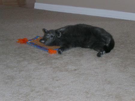 Casper (born approx 2001) Photo taken 2003