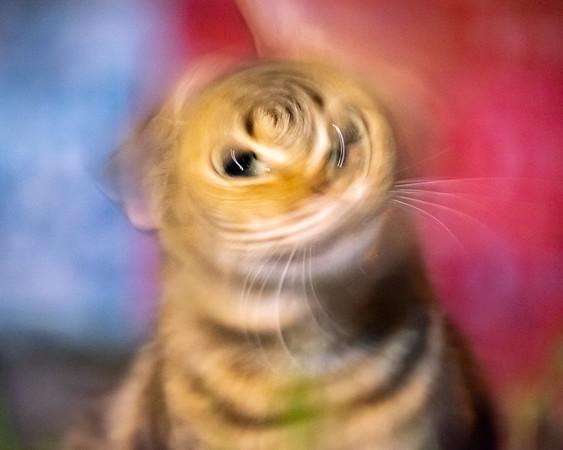 Motion Blur Headshake
