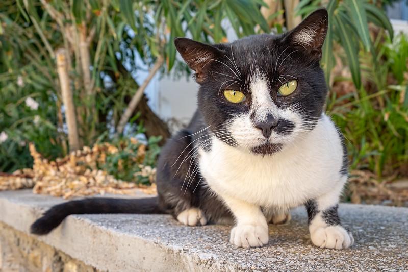 Half Moustache
