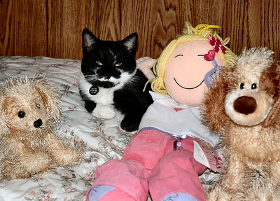 Sally with her buddies on the bed
