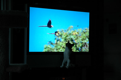 Tommy was fascinated with the Parrots on TV and was trying to catch them