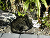 This is Racer our 17 year old cat who sadly died of liver cancer in 2004