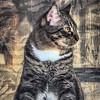 2019-01-13_neighbor's cat_P1130056