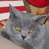 11-03-08 Bonnie