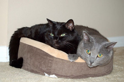 Batman & Casper in cat bed 01/29/06<br /> 1996 - 09/22/2010<br /> RIP we will miss you Batman