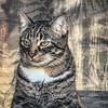 2019-01-13_neighbor's cat_P1130052