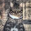 2019-01-13_neighbor's cat_P1130061