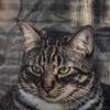 2019-01-13_neighbor's cat_P1130063