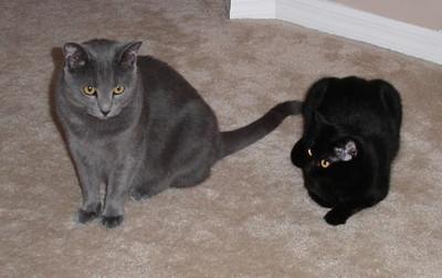 Caper & Baby (October 2003)