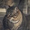 2019-01-13_neighbor's cat_P1130047