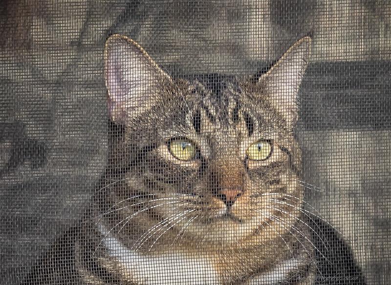 2019-01-13_neighbor's cat_P1130064