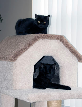 Baby on top of Cat Cottage with Batman inside 01/08/06<br /> 1996 - 09/22/2010<br /> RIP we will miss you Batman