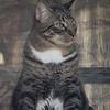 2019-01-13_neighbor's cat_P1130062