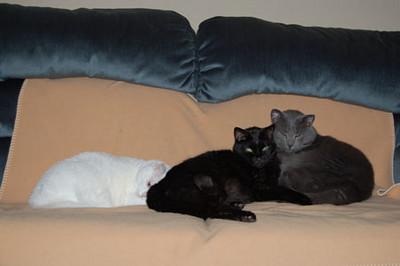 Sylvia, Batman, & Casper 04/23/06<br /> 1996 - 09/22/2010<br /> RIP we will miss you Batman