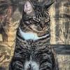 2019-01-13_neighbor's cat_P1130055