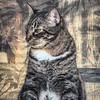 2019-01-13_neighbor's cat_P1130053