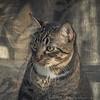 2019-01-13_neighbor's cat_P1130048