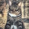 2019-01-13_neighbor's cat_P1130054
