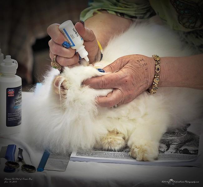 2016-01-16_P1164840_Skyway Cat Club Show,Largo,Fl