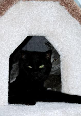 Batman & Casper in Cat Cottage 01/08/06<br /> 1996 - 09/22/2010<br /> RIP we will miss you Batman